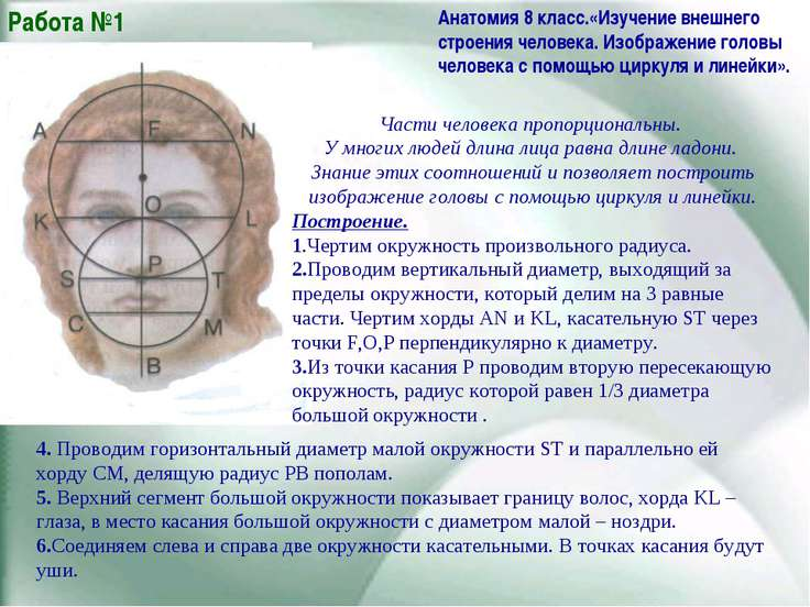 Части человека пропорциональны. У многих людей длина лица равна длине ладони....