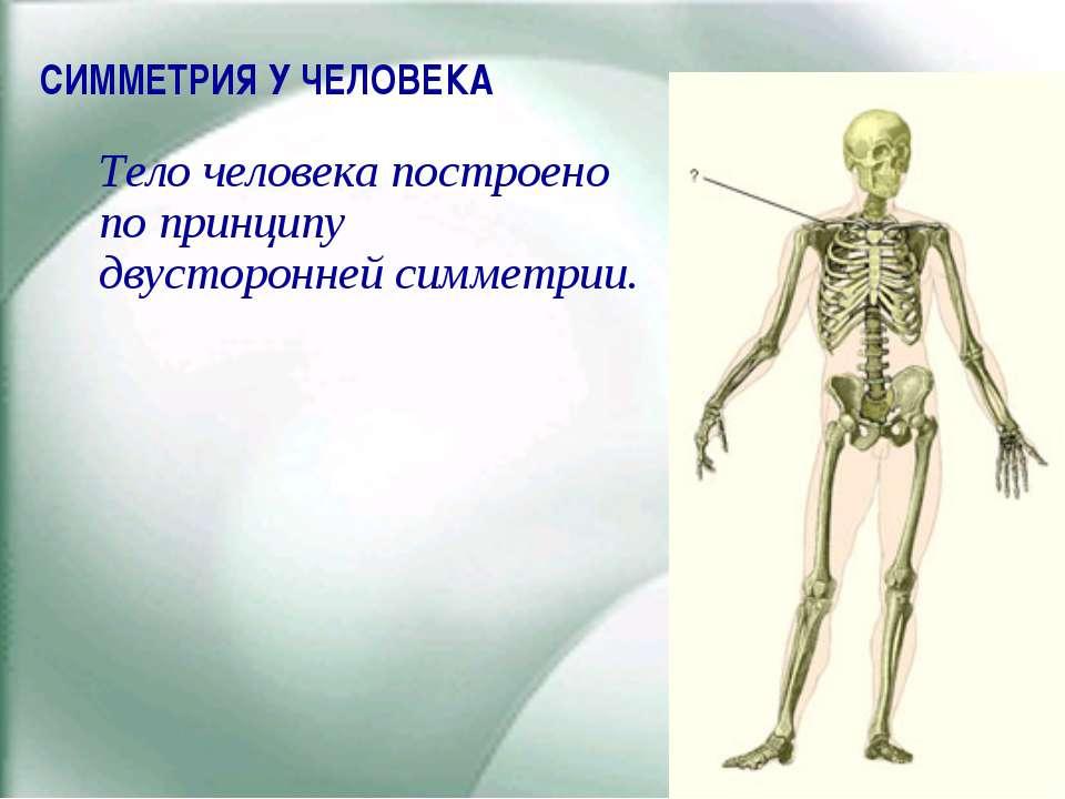СИММЕТРИЯ У ЧЕЛОВЕКА Тело человека построено по принципу двусторонней симметрии.
