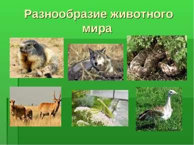 Разнообразие животного мира