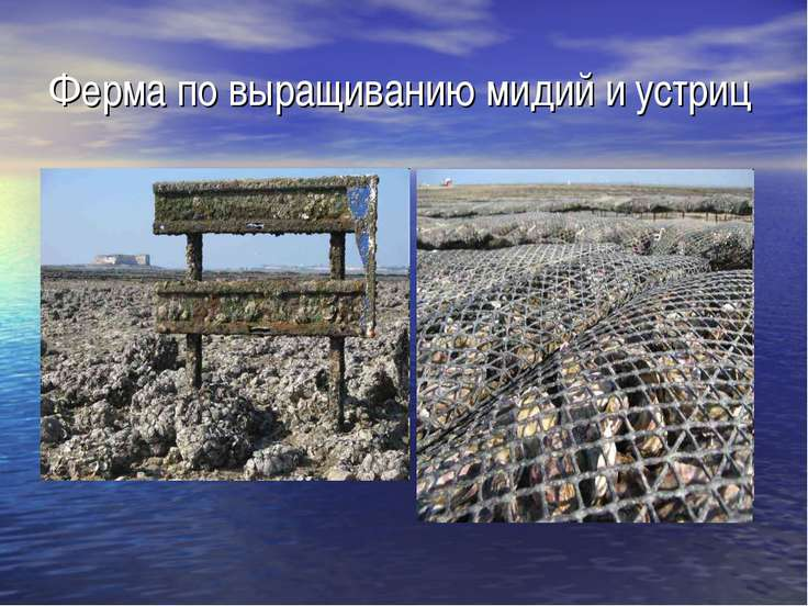 Ферма по выращиванию мидий и устриц