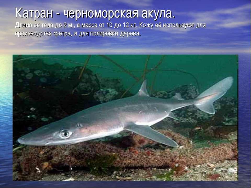 Катран - черноморская акула. Длина её тела до 2 м., а масса от 10 до 12 кг. К...