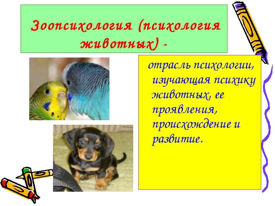 Зоопсихология (психология животных) - отрасль психологии, изучающая психику ж...