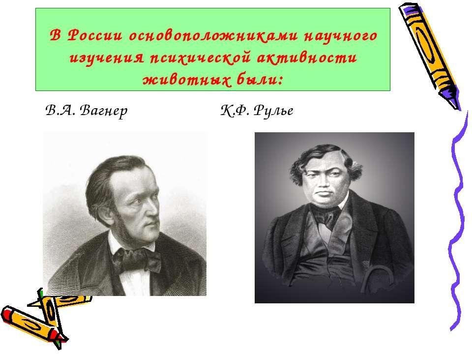 В России основоположниками научного изучения психической активности животных ...
