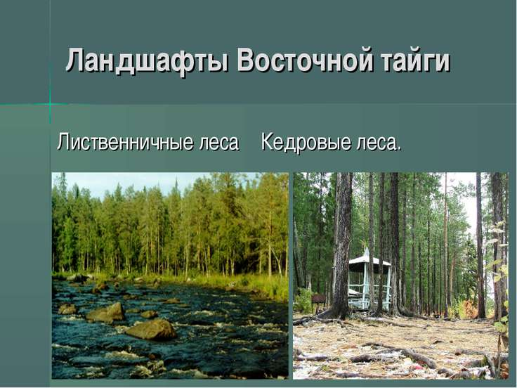 Ландшафты Восточной тайги Лиственничные леса Кедровые леса.