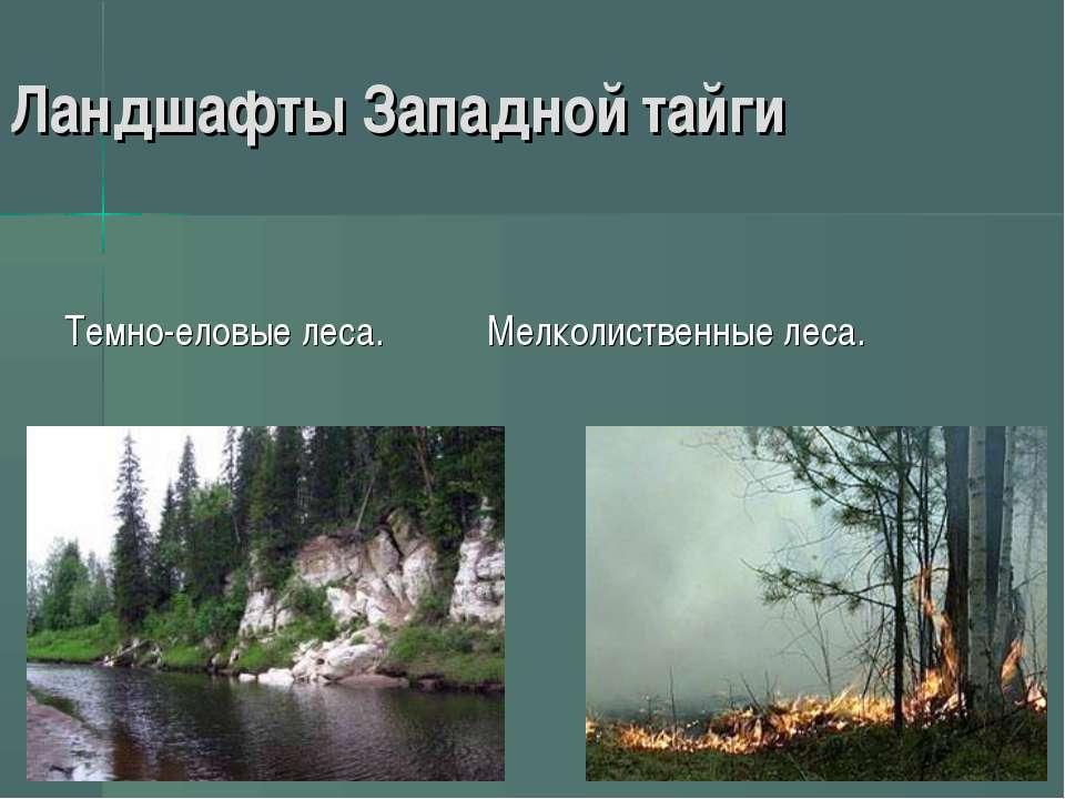 Ландшафты Западной тайги Темно-еловые леса. Мелколиственные леса.