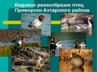 Видовое разнообразие птиц Приморско-Ахтарского района