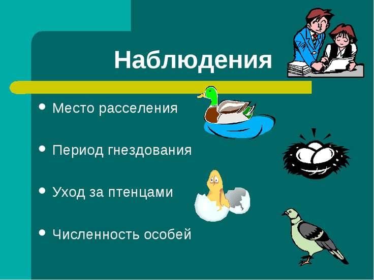 Наблюдения Место расселения Период гнездования Уход за птенцами Численность о...