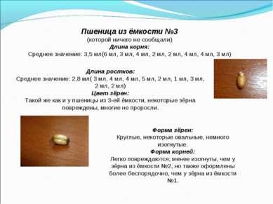 Пшеница из ёмкости №3 (которой ничего не сообщали) Длина корня: Среднее значе...