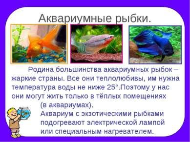 Аквариумные рыбки. Родина большинства аквариумных рыбок – жаркие страны. Все ...