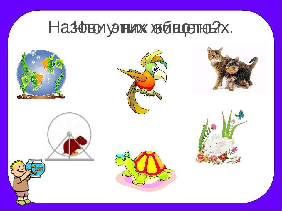 Назови этих животных. Что у них общего?