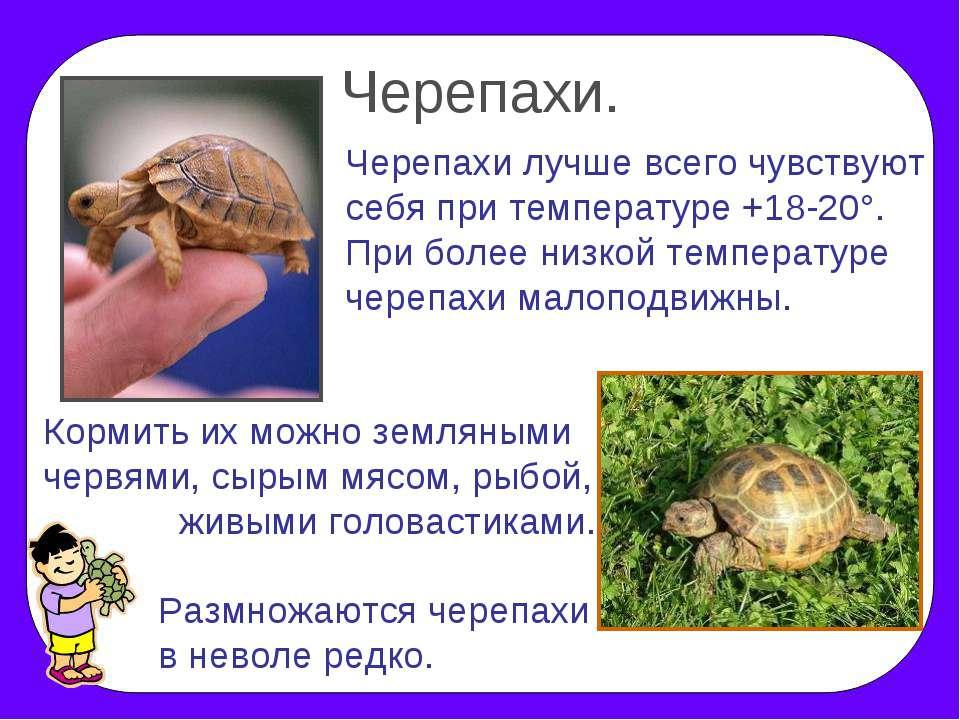 рассказ о черепах с картинками удается подчеркнуть главное
