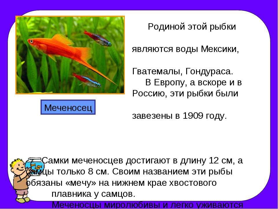 Родиной этой рыбки являются воды Мексики, Гватемалы, Гондураса. В Европу, а в...
