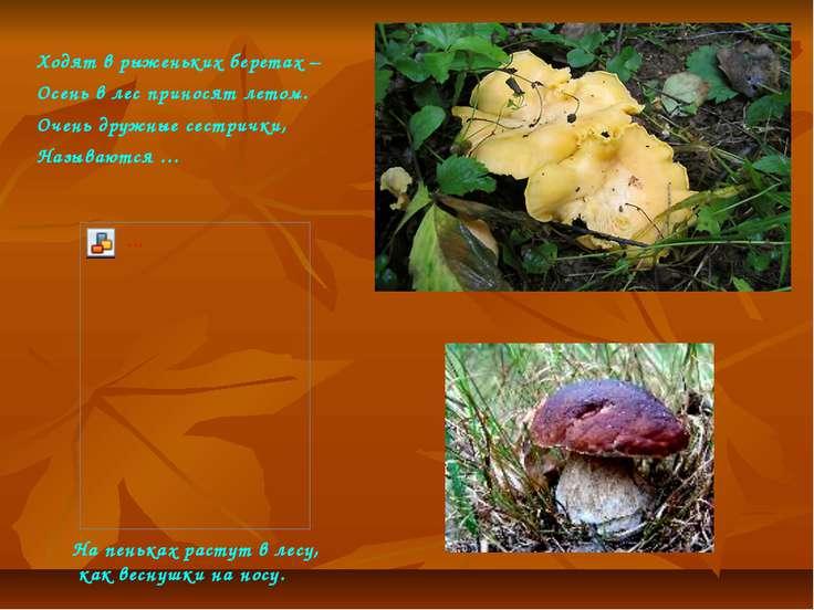 Ходят в рыженьких беретах – Осень в лес приносят летом. Очень дружные сестрич...