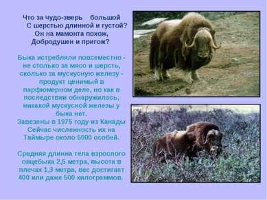 Что за чудо-зверь большой С шерстью длинной и густой? Он на мамонта похож, До...