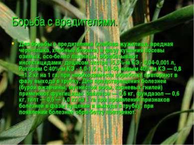 Борьба с вредителями. Для борьбы с вредителями (хлебная жужелица, вредная чер...