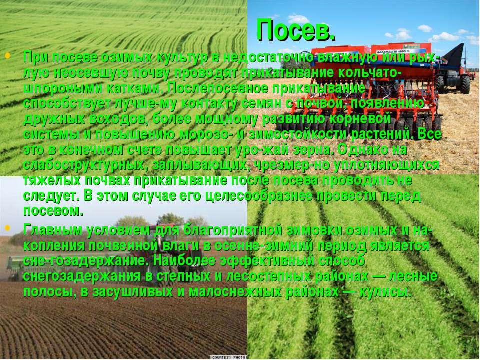 Посев. При посеве озимых культур в недостаточно влажную или рых лую неосевшую...