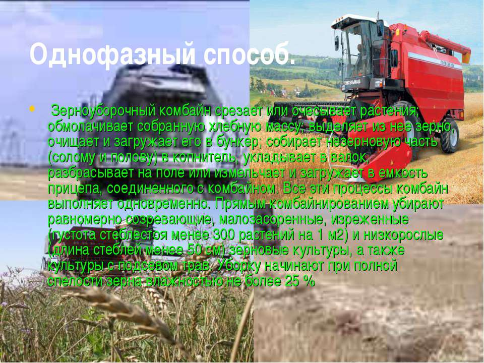 Однофазный способ. Зерноуборочный комбайн срезает или очесывает растения; обм...