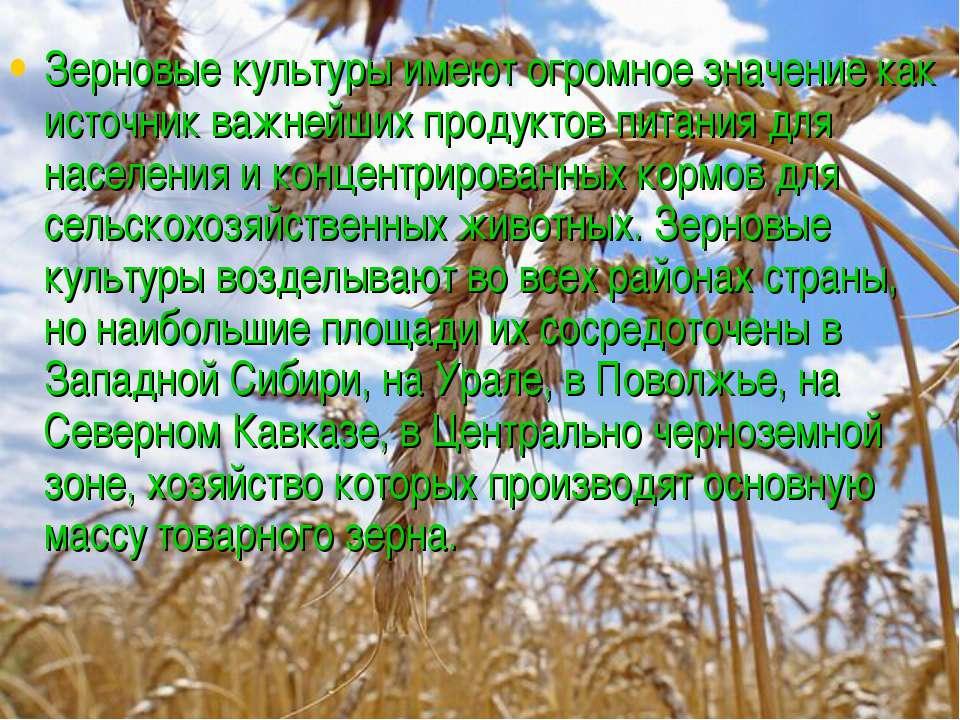 Зерновые культуры имеют огромное значение как источник важнейших продуктов пи...
