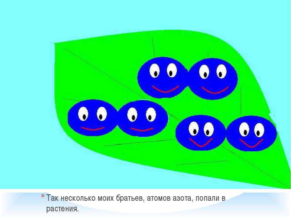 Так несколько моих братьев, атомов азота, попали в растения.