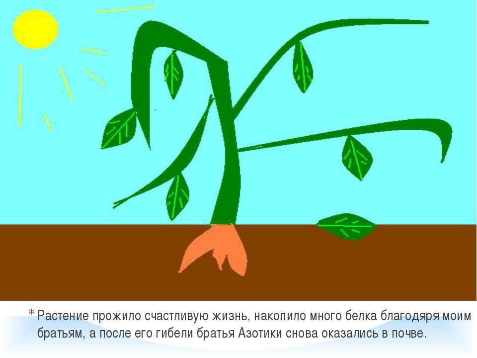 Растение прожило счастливую жизнь, накопило много белка благодяря моим братья...