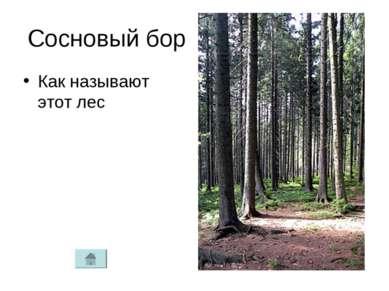 Сосновый бор Как называют этот лес