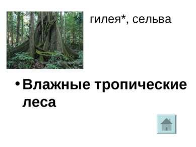 гилея*, сельва Влажные тропические леса