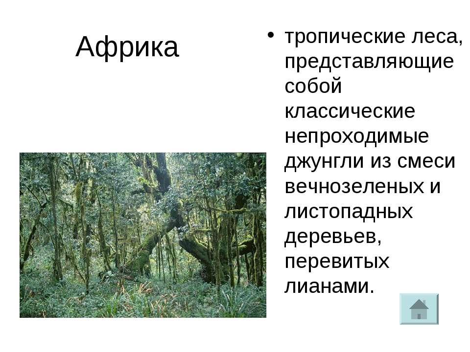 Африка тропические леса, представляющие собой классические непроходимые джунг...