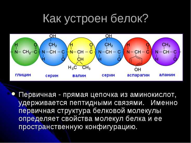 Как устроен белок? Первичная - прямая цепочка из аминокислот, удерживается пе...