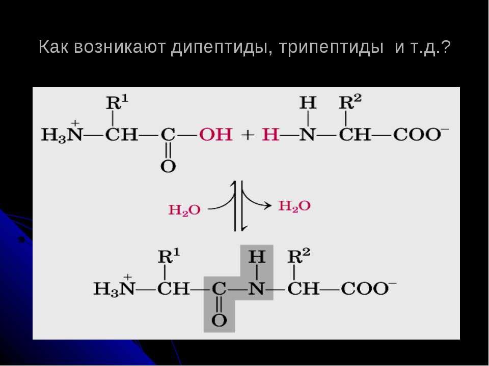 Как возникают дипептиды, трипептиды и т.д.?