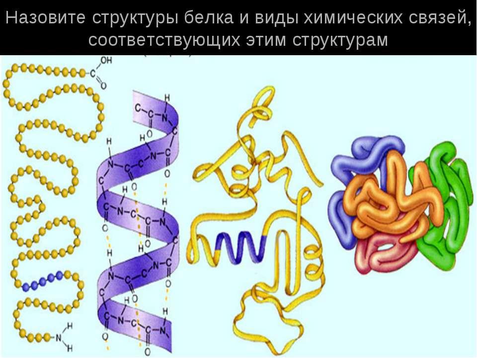 Назовите структуры белка и виды химических связей, соответствующих этим струк...