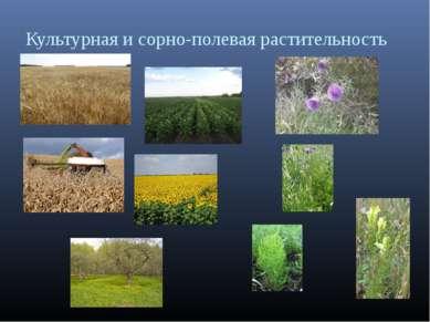 Культурная и сорно-полевая растительность