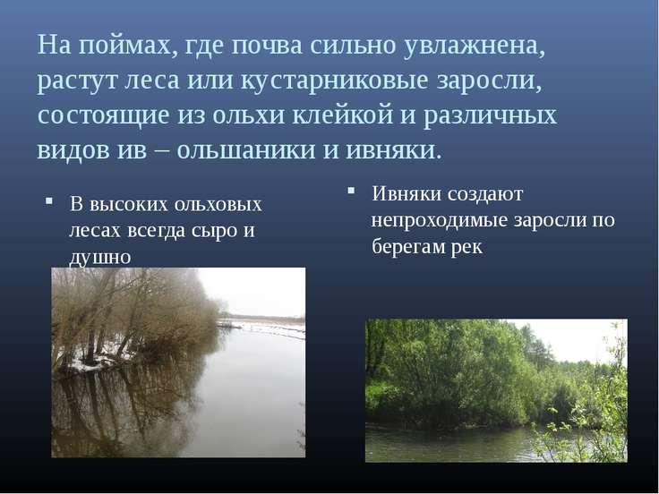 На поймах, где почва сильно увлажнена, растут леса или кустарниковые заросли,...