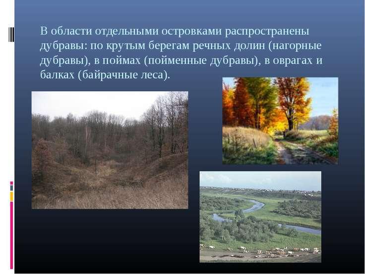 В области отдельными островками распространены дубравы: по крутым берегам реч...