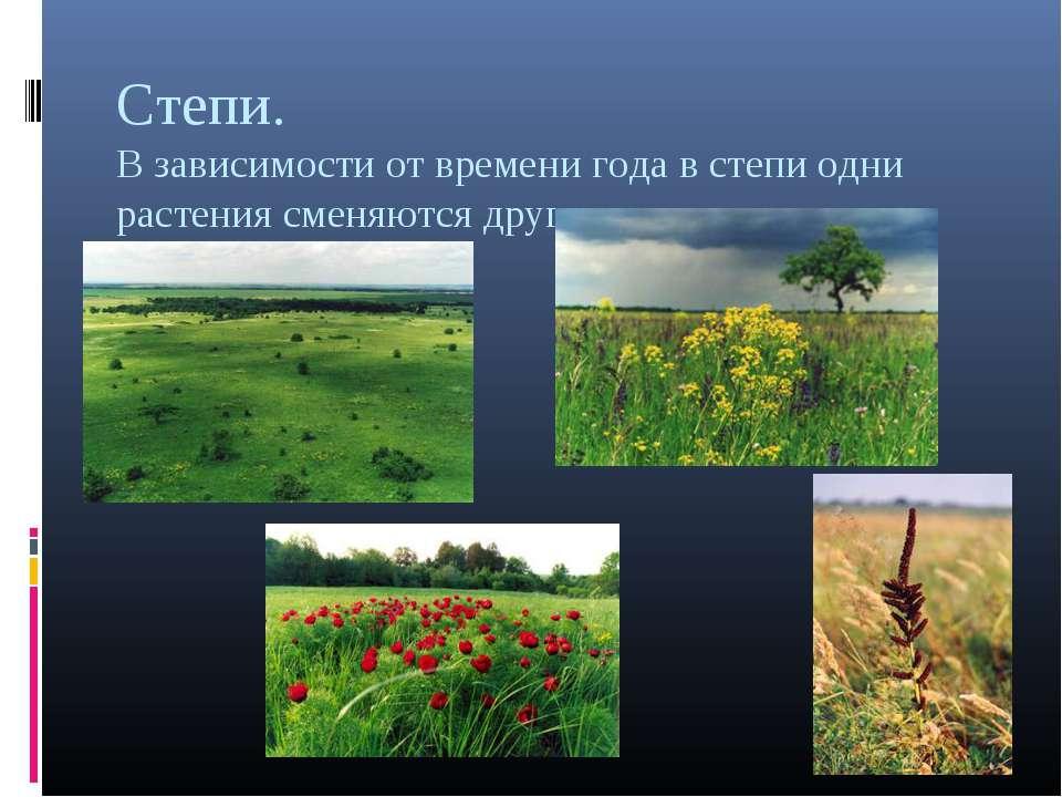 Степи. В зависимости от времени года в степи одни растения сменяются другими.
