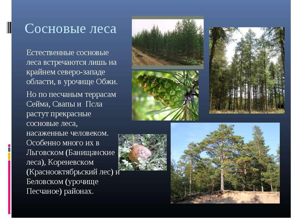 Сосновые леса Естественные сосновые леса встречаются лишь на крайнем северо-з...