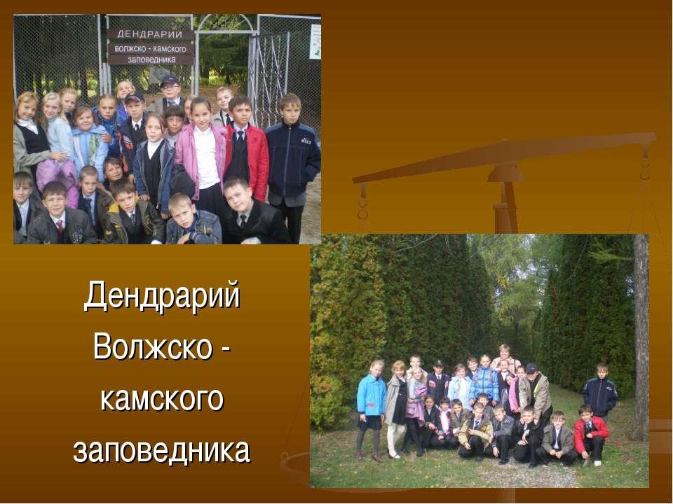 Дендрарий Волжско - камского заповедника