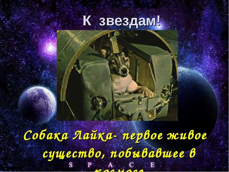 Собака Лайка- первое живое существо, побывавшее в космосе К звездам!
