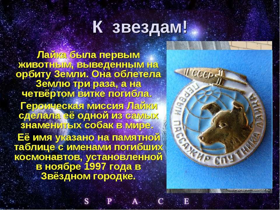 К звездам! Лайка была первым животным, выведенным на орбиту Земли. Она облете...