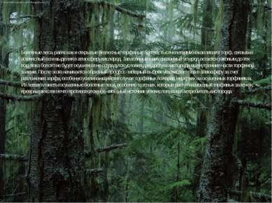 Болотные леса, равно как и открытые безлесные торфяные болота, тысячелетиями ...