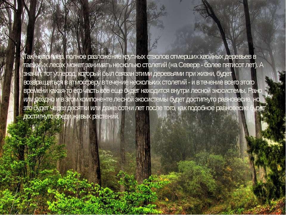 Так, например, полное разложение крупных стволов отмерших хвойных деревьев в ...