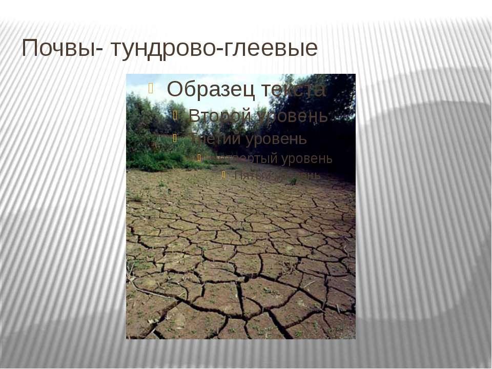 Почвы- тундрово-глеевые