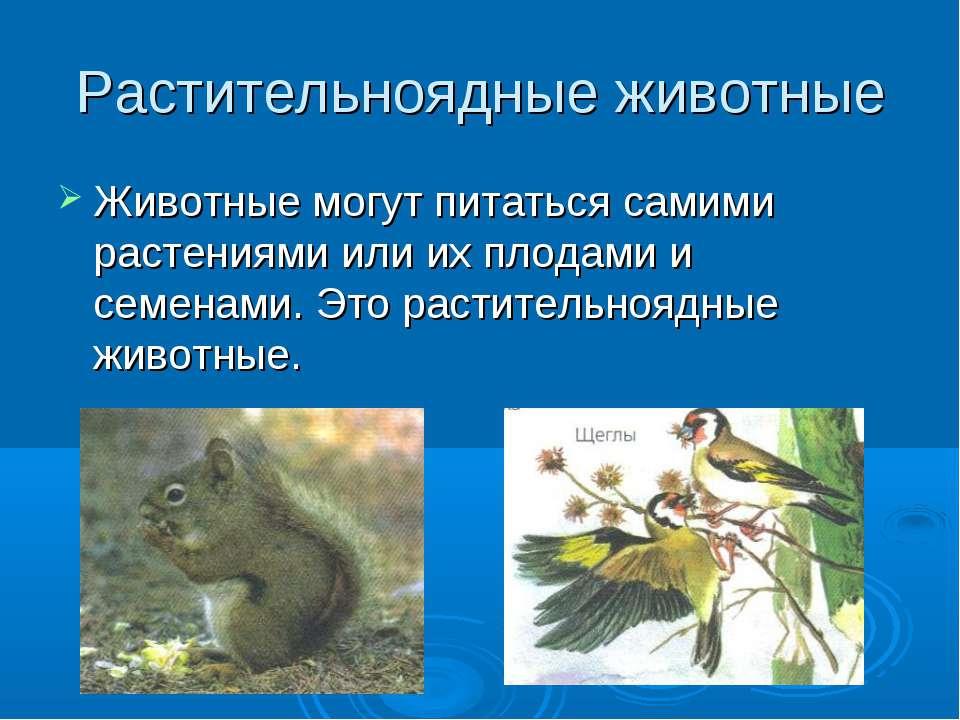 Растительноядные животные Животные могут питаться самими растениями или их пл...