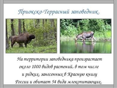 Приокско-Террасный заповедник. На территории заповедника произрастает около 1...