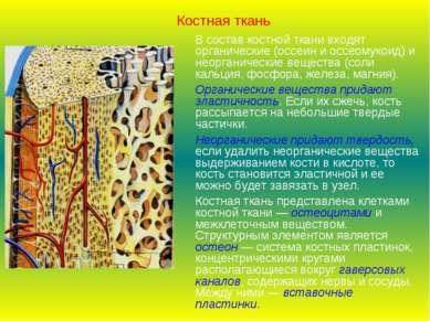 Костная ткань В состав костной ткани входят органические (оссеин и оссеомукои...