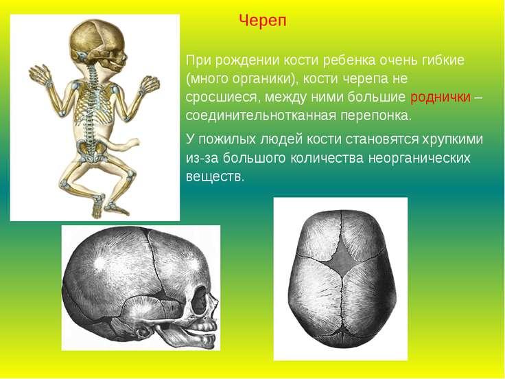 При рождении кости ребенка очень гибкие (много органики), кости черепа не сро...