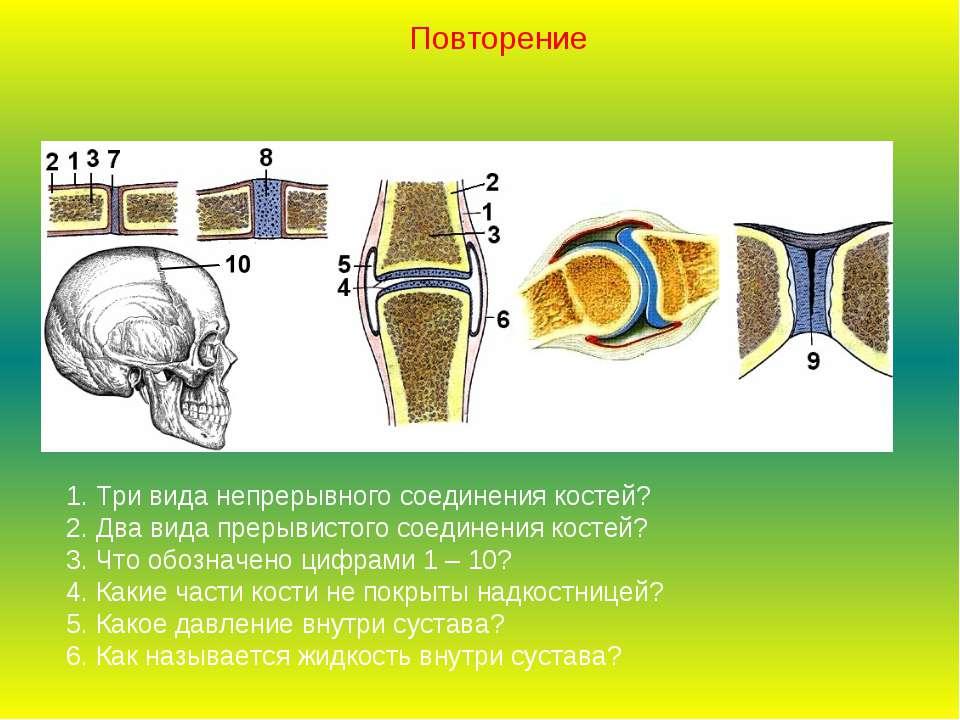 1. Три вида непрерывного соединения костей? 2. Два вида прерывистого соединен...