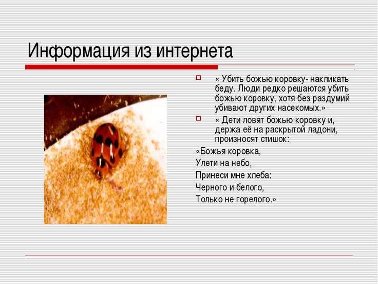 Информация из интернета « Убить божью коровку- накликать беду. Люди редко реш...
