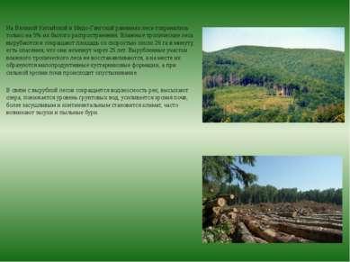 На Великой Китайской и Индо-Гангской равнинах леса сохранились только на 5% и...