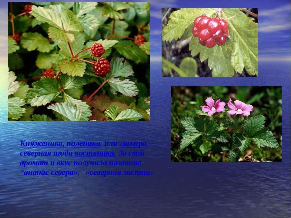 Княженика, поленика, или мамура — северная ягода костяника. За свой аромат и ...