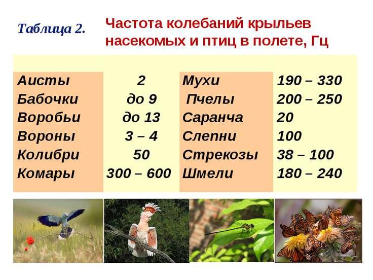 Таблица 2. Частота колебаний крыльев насекомых и птиц в полете, Гц  Аисты...